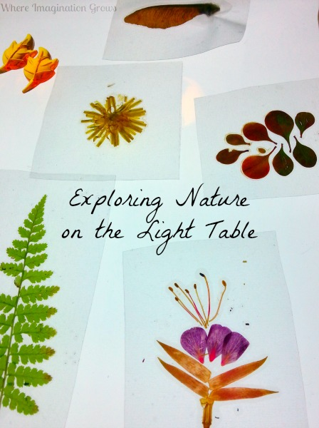 nature slides on light table